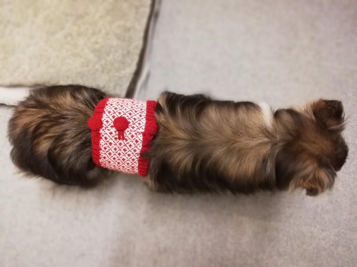 犬も手編みの腹巻で冷え対策♪