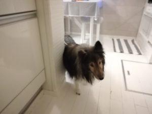 『愛犬のための症状・目的別 食事百科』を読んでいます
