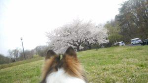 ~犬の十戒~ そしてお花見