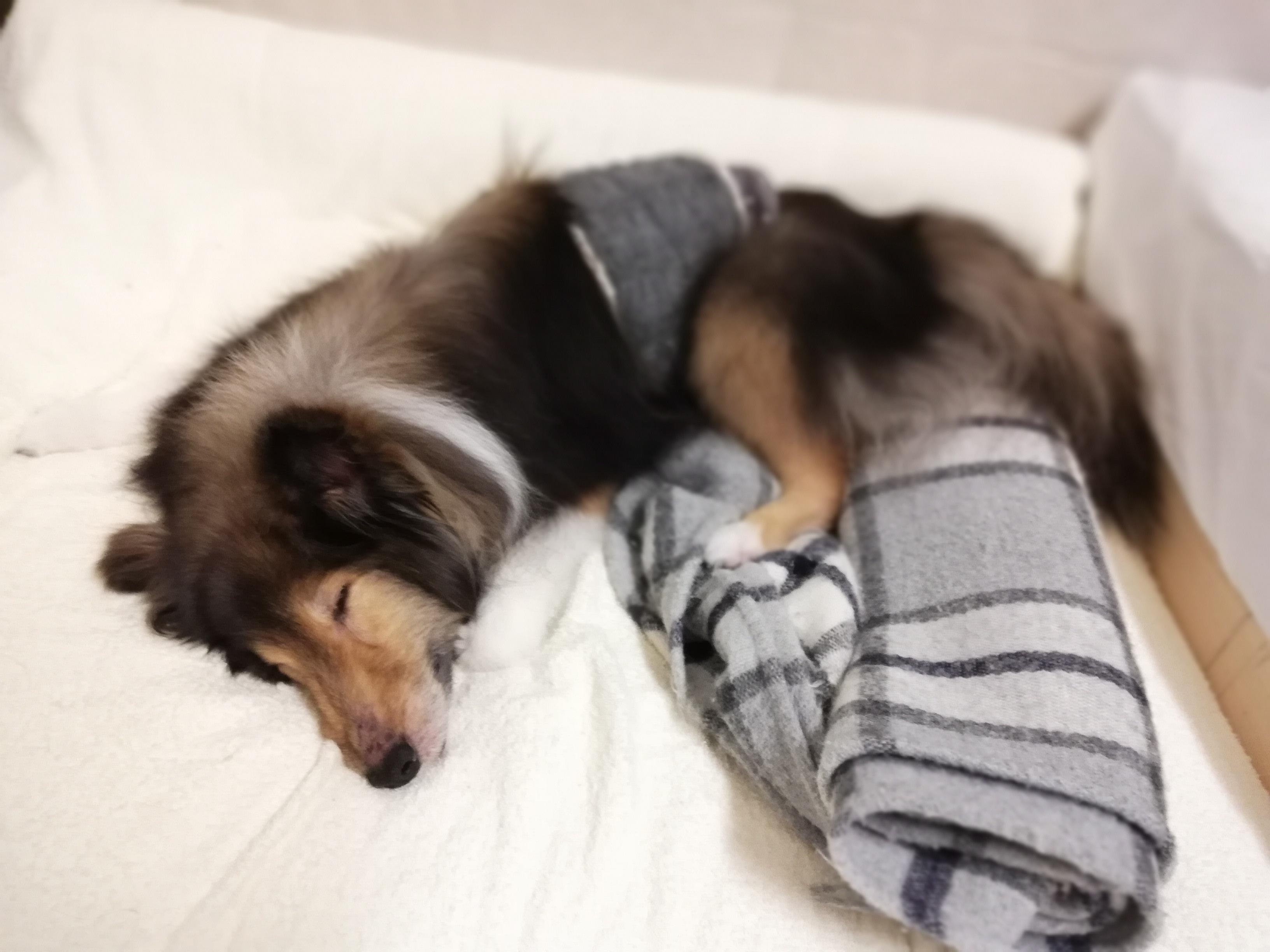 犬の腎臓病対策に手軽にできる「ポリアミン」の摂取